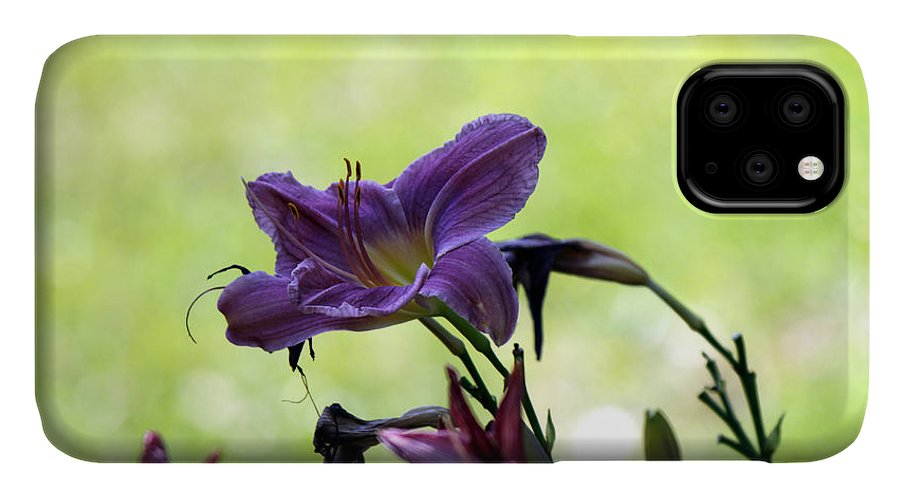 Day Lily IPhone Case featuring the photograph Lily Garden by Deborah Hughes