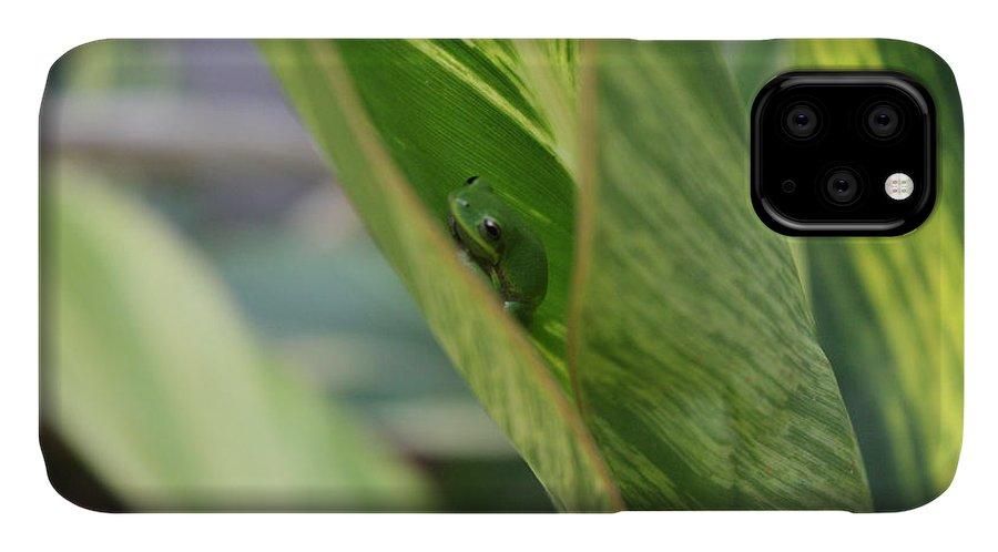Tree Frogs IPhone Case featuring the photograph Newbie by Deborah Hughes