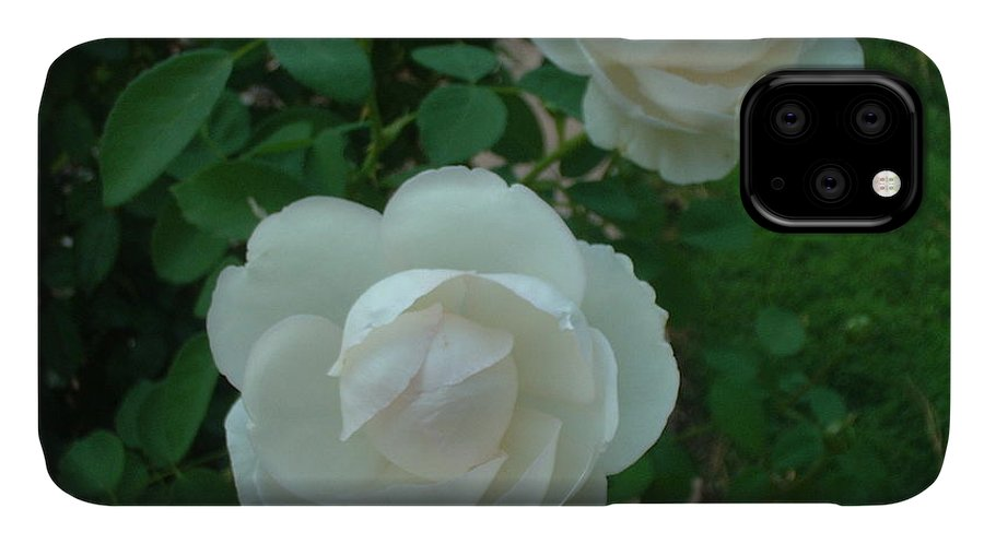Rose IPhone Case featuring the photograph Perfect Pair by Mark Robbins