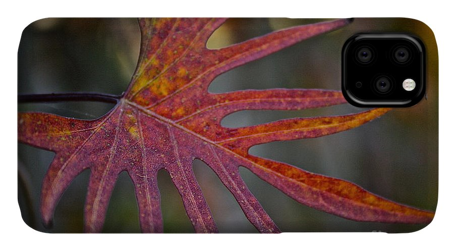 Outdoors IPhone Case featuring the photograph Pointedly by Susan Herber