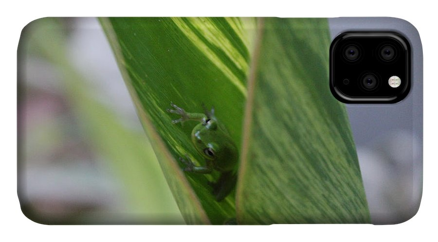 Tree Frogs IPhone Case featuring the photograph You Go First by Deborah Hughes