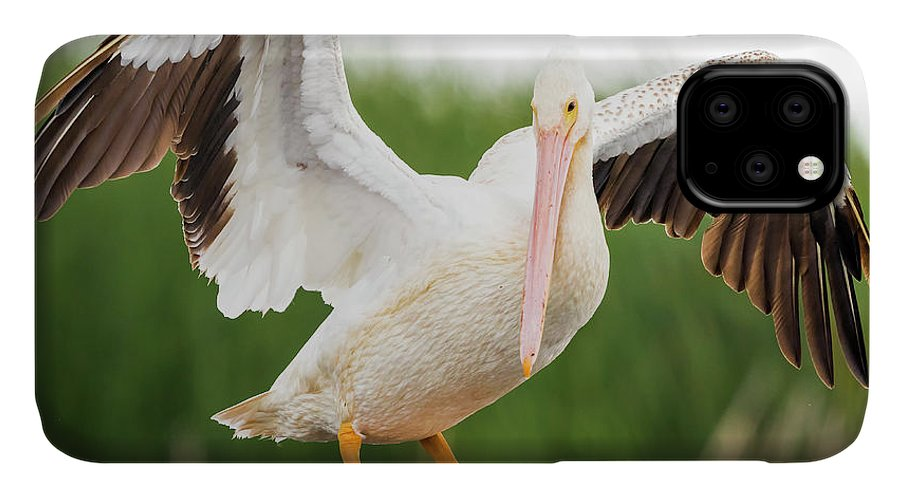 Canon IPhone Case featuring the photograph American White Pelican by Ricky L Jones