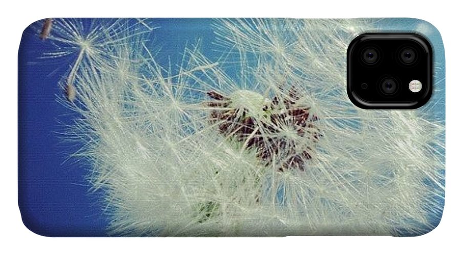 Dandelion IPhone Case featuring the photograph Dandelion and blue sky by Matthias Hauser