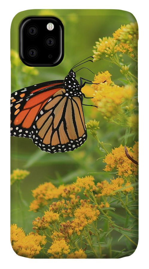 Monarch Butterfly IPhone 11 Case featuring the photograph Monarch Butterfly On Goldenrod 1 by John Burk