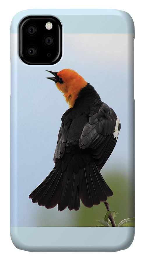 Yellow-headed Blackbird IPhone Case featuring the photograph Showing Off by Shane Bechler