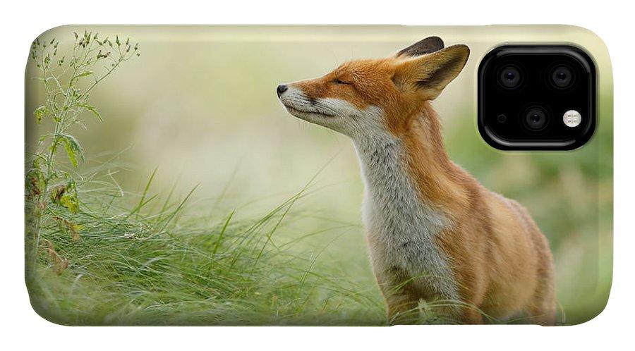 Fox IPhone 11 Case featuring the photograph Zen Fox Series - Zen Fox by Roeselien Raimond