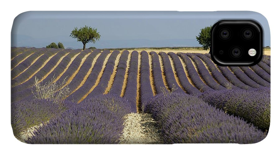 Lavender IPhone 11 Case featuring the photograph Field Of Lavender. Provence by Bernard Jaubert
