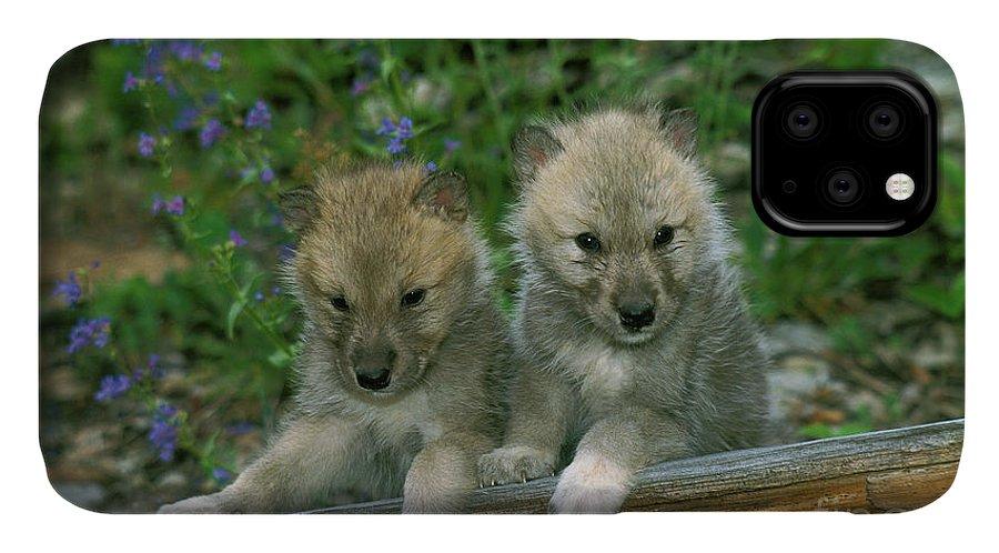 Arctic Wolf iphone 11 case