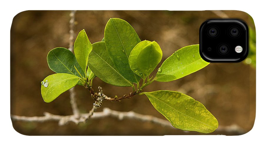 Agriculture IPhone Case featuring the photograph Coca Plantation Erythroxylum Coca by Gerard Lacz