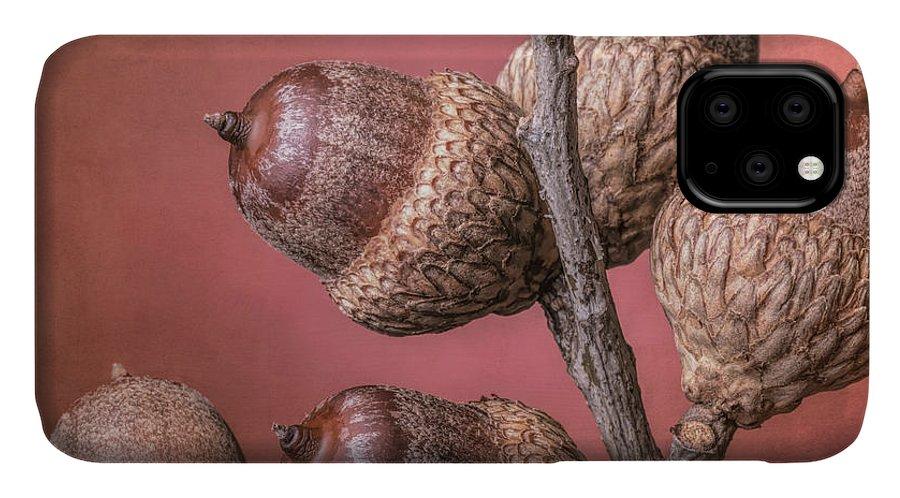 Acorn IPhone 11 Case featuring the photograph Acorns by Tom Mc Nemar