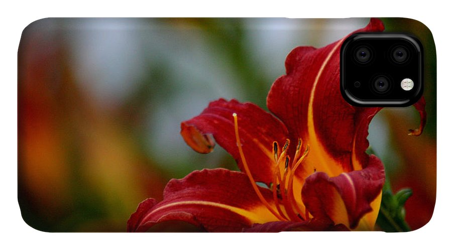 Flower IPhone Case featuring the photograph After The Rain Came The Flowers by Y C