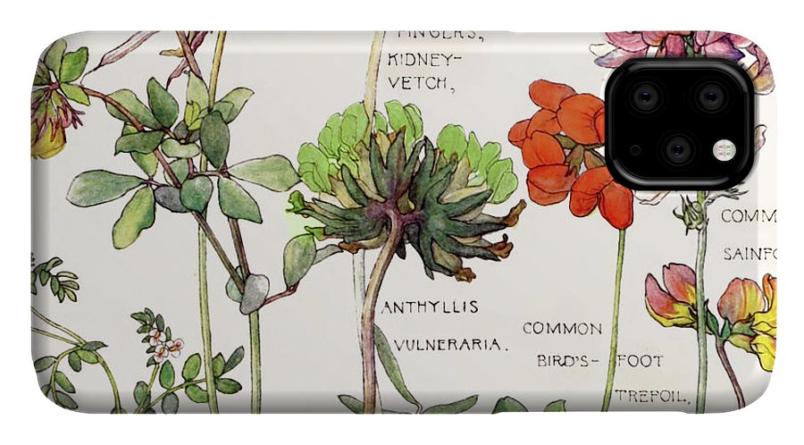 Flowers IPhone Case featuring the painting Ambrosia V by Mindy Sommers