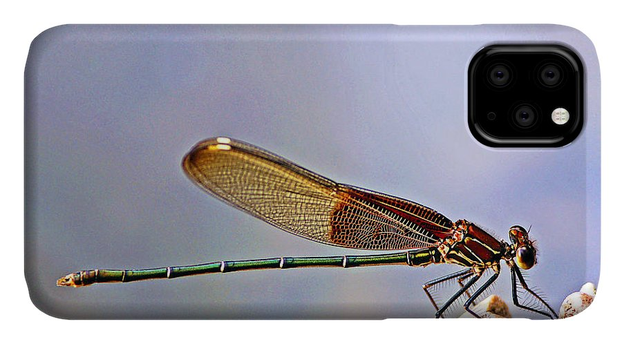 Damselfly IPhone Case featuring the photograph American Rubyspot by Bill Morgenstern
