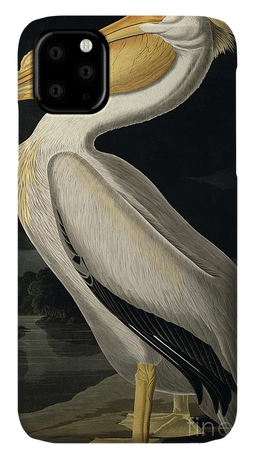 American White Pelican IPhone Case featuring the painting American White Pelican by John James Audubon