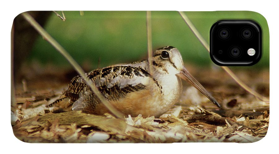Wildlife IPhone 11 Case featuring the photograph American Woodcock by John Burk