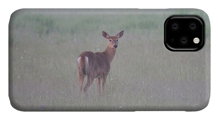 Deer IPhone Case featuring the photograph An Early Summer Morning by Michael Peychich