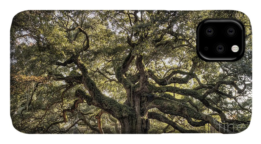 Angel Oak Tree IPhone 11 Case featuring the photograph Angel Oak Tree Live Oak by Dustin K Ryan