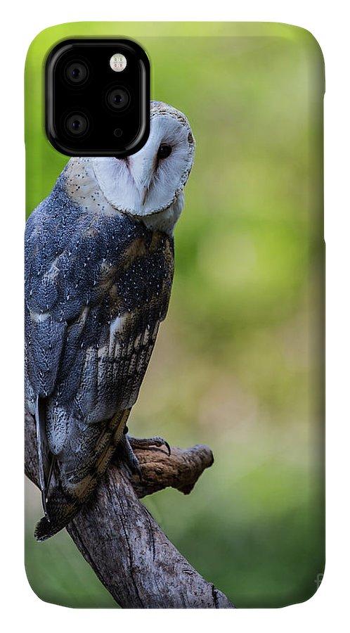 Barn owl drawing iPhone 11 case