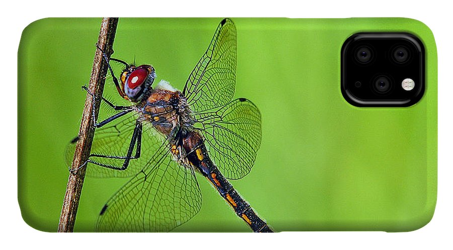 Dragonfly IPhone Case featuring the photograph Baskettail by Bill Morgenstern