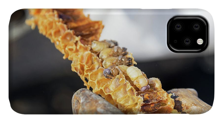Bee IPhone Case featuring the photograph Bee Grub on Honeycomb by Jess Kraft