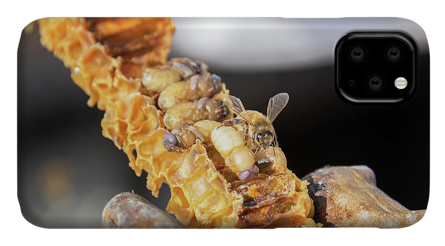 Bee IPhone Case featuring the photograph Bee Grubs and Bees by Jess Kraft