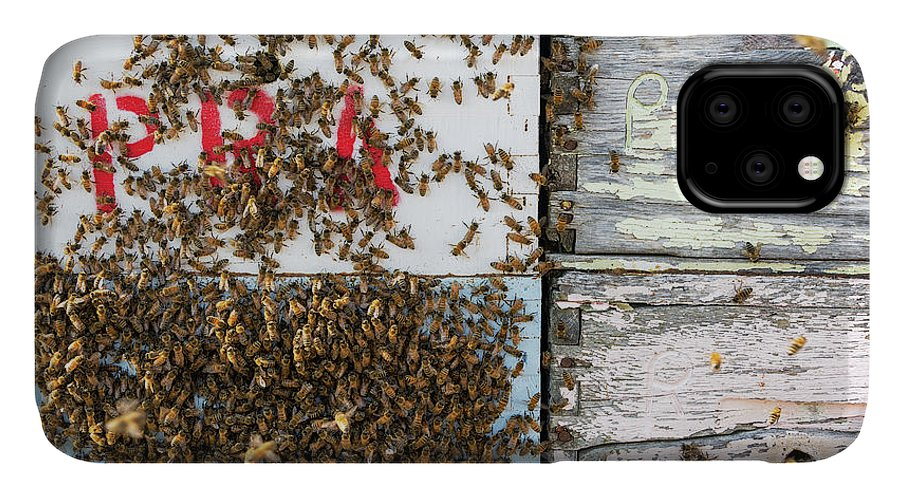 Bee IPhone Case featuring the photograph Bees on a Beehive by Jess Kraft