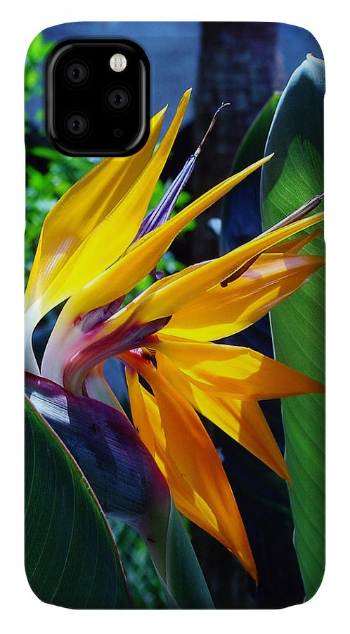 Flowers IPhone 11 Case featuring the photograph Bird Of Paradise by Susanne Van Hulst