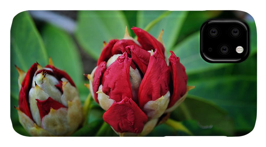Rhododendron IPhone 11 Case featuring the photograph Birth Of A Rhoddy by Tikvah's Hope