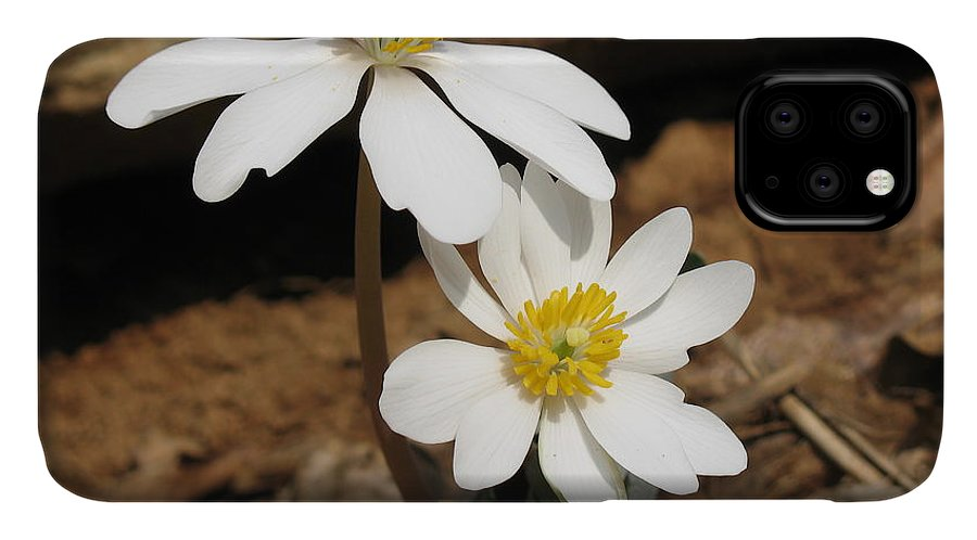 Bloodroot IPhone Case featuring the photograph Bloodroot by Steve Gass