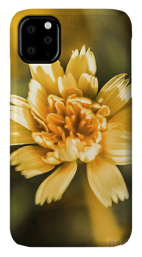 New IPhone 11 Case featuring the photograph Blossoming Dandelion Flower by Jorgo Photography - Wall Art Gallery