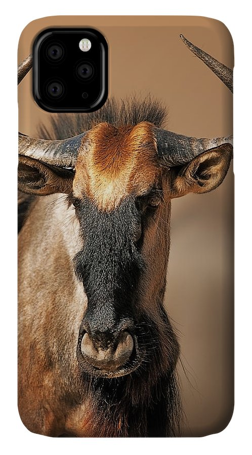 Wildebeest IPhone 11 Case featuring the photograph Blue Wildebeest Portrait by Johan Swanepoel
