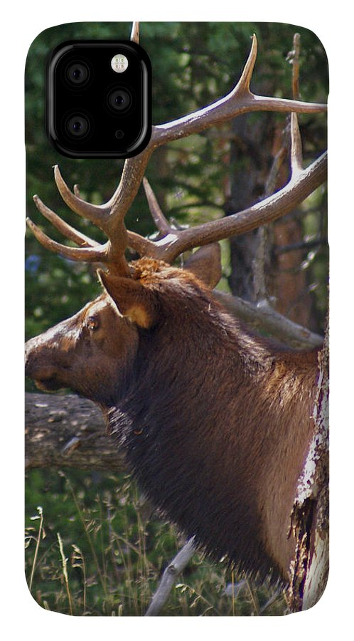 Elk IPhone Case featuring the photograph Bull Elk 2 by Heather Coen