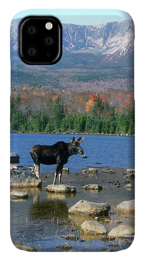 Wildlife IPhone 11 Case featuring the photograph Bull Moose Below Mount Katahdin by John Burk