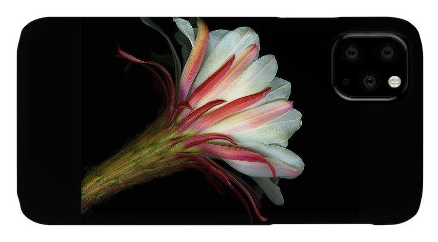 Scanart IPhone Case featuring the photograph Cactus Flower by Christian Slanec