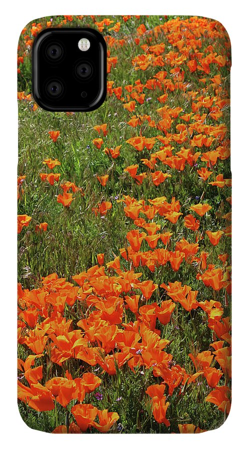 Poppies IPhone 11 Case featuring the mixed media California Poppies- Art By Linda Woods by Linda Woods