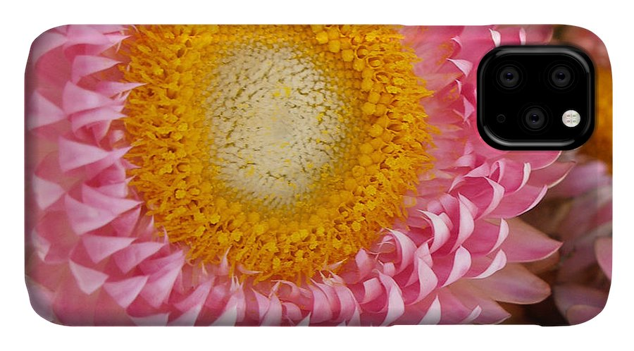 Flower IPhone Case featuring the photograph Carmel Flower by Sarah Madsen