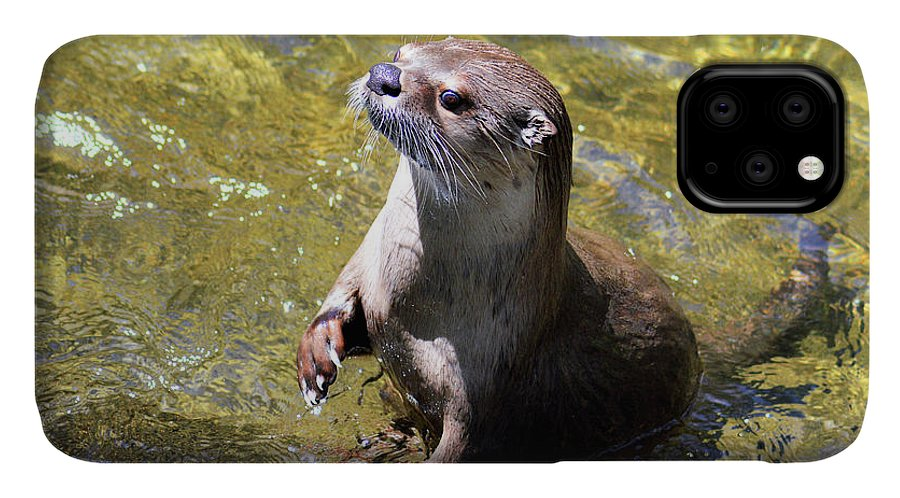 North American River Otter IPhone 11 Case featuring the photograph Curious River Otter by Kathy Kelly