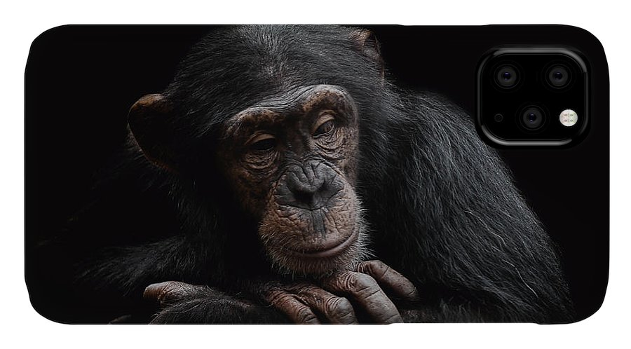 Chimpanzee IPhone 11 Case featuring the photograph Depression by Paul Neville