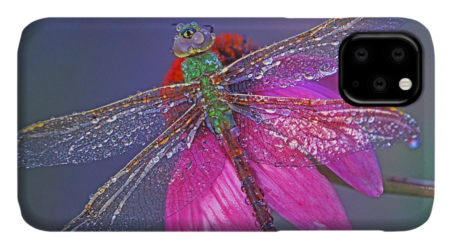 Dew Covered Dragonfly Rests On Purple Cone Flower IPhone Case featuring the photograph Dreaming Dragon by Bill Morgenstern