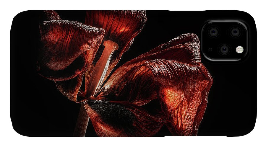 Tulip Blossom IPhone Case featuring the photograph Dried Tulip Blossom by Scott Norris