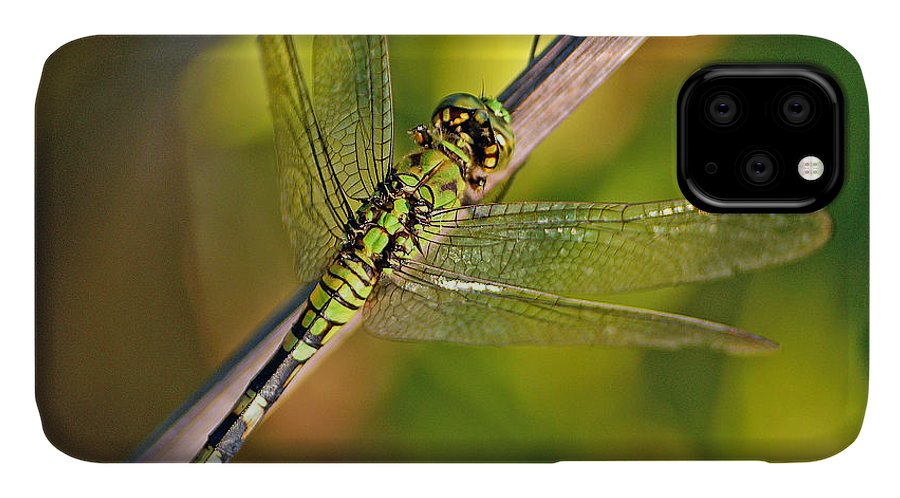 Dragonfly IPhone Case featuring the photograph Eastern Pondhawk by Bill Morgenstern