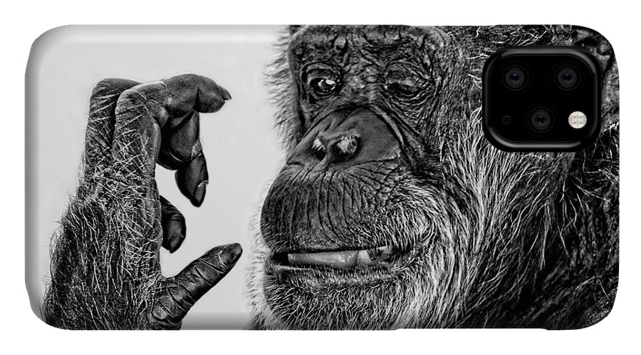 Elderly Chimp IPhone Case featuring the photograph Elderly Chimp Studying Her Hand IIi by Jim Fitzpatrick