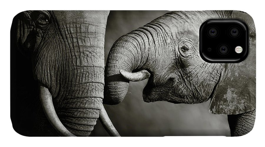 Elephant; Interact; Touch; Gently; Trunk; Young; Large; Small; Big; Tusk; Together; Togetherness; Passionate; Affectionate; Behavior; Art; Artistic; Black; White; B&w; Monochrome; Image; African; Animal; Wildlife; Wild; Mammal; Animal; Two; Moody; Outdoor; Nature; Africa; Nobody; Photograph; Addo; National; Park; Loxodonta; Africana; Muddy; Caring; Passion; Affection; Show; Display; Reach IPhone Case featuring the photograph Elephant affection by Johan Swanepoel
