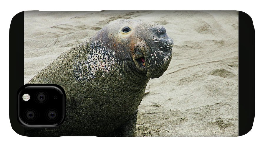 Elephant Seal IPhone Case featuring the photograph Elephant Seal by Anthony Jones