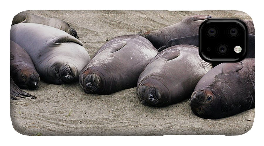 Seals IPhone Case featuring the photograph Elephant Seals by Anthony Jones