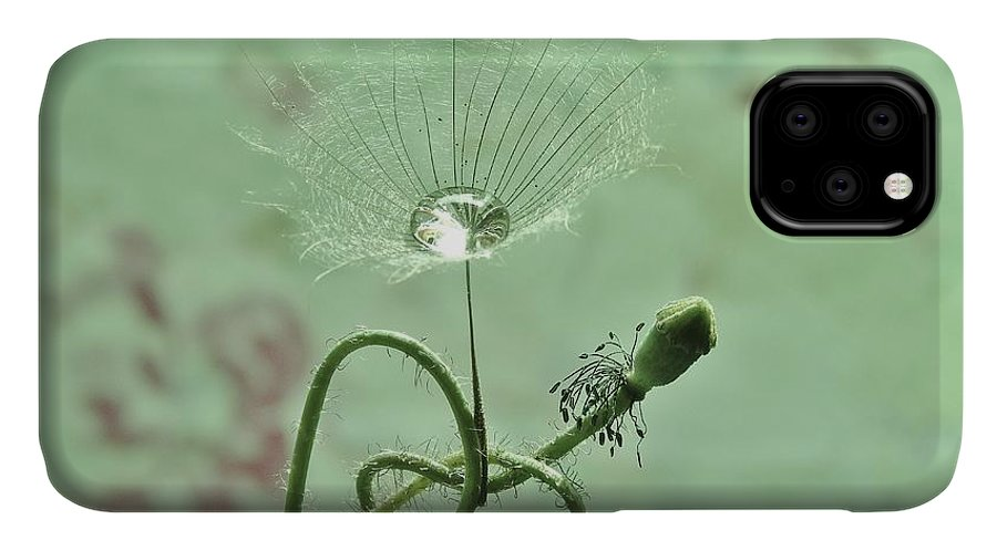 Poppy IPhone Case featuring the photograph Gone To Seed by Barbara St Jean