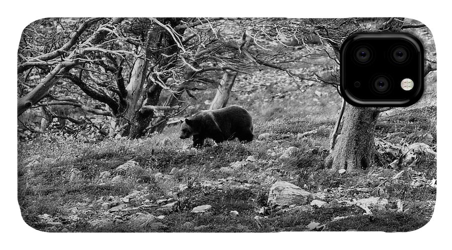 Glacier National Park IPhone Case featuring the photograph Grizzly Walking Through Dead Trees - Black And White by Mark Kiver