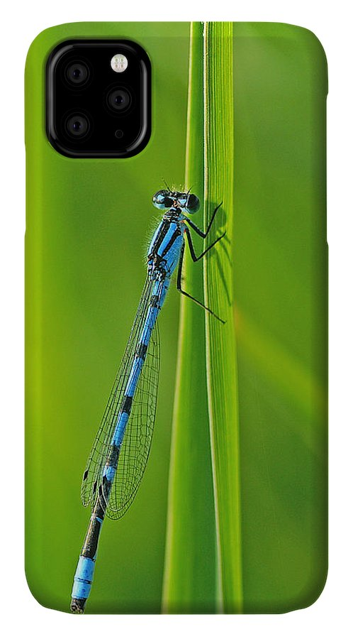 Damselfly IPhone Case featuring the photograph Hagens Bluet by Bill Morgenstern