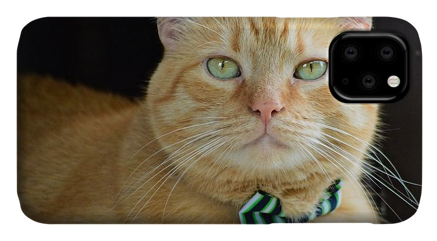 Cat IPhone Case featuring the photograph Hammy The Handsome by Michelle Williams
