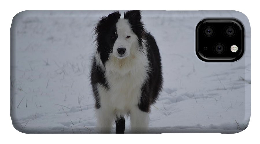 Dog IPhone Case featuring the photograph Hello Baby by Michelle Williams